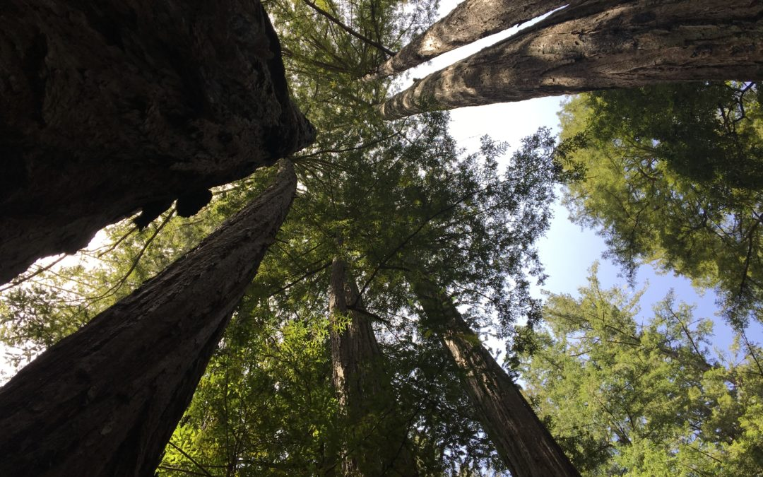 Grounding in Nature
