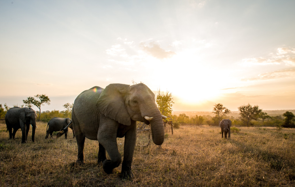 The Language of Awareness Lessons from Elephants and Horses