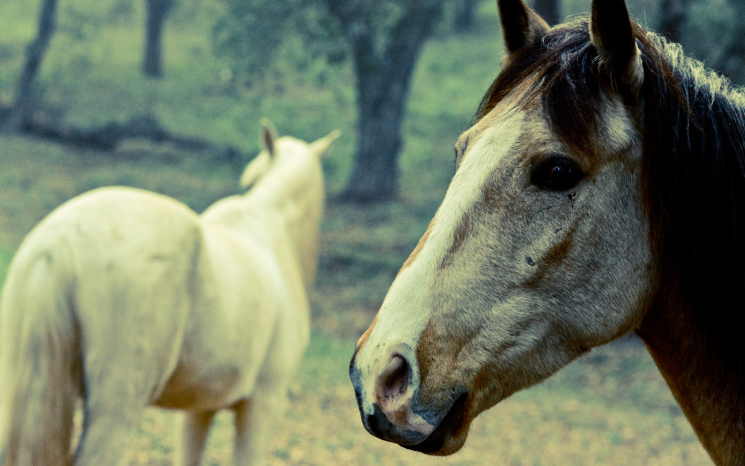 Transforming Trauma Equine-Assisted Therapy