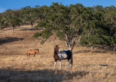 Embrace an Intimate Life – Paso Robles
