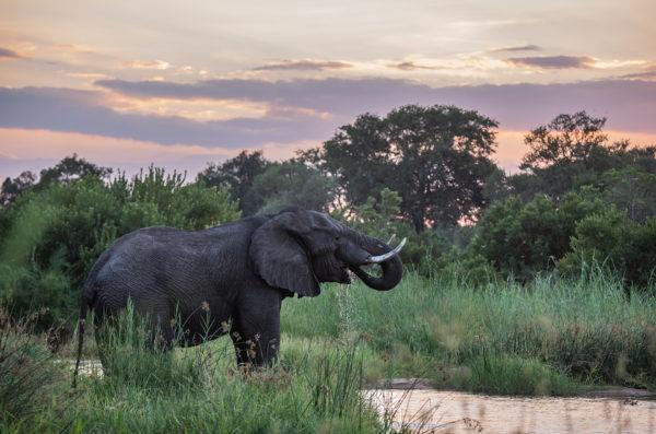 Botswana pic Koelle Simpson